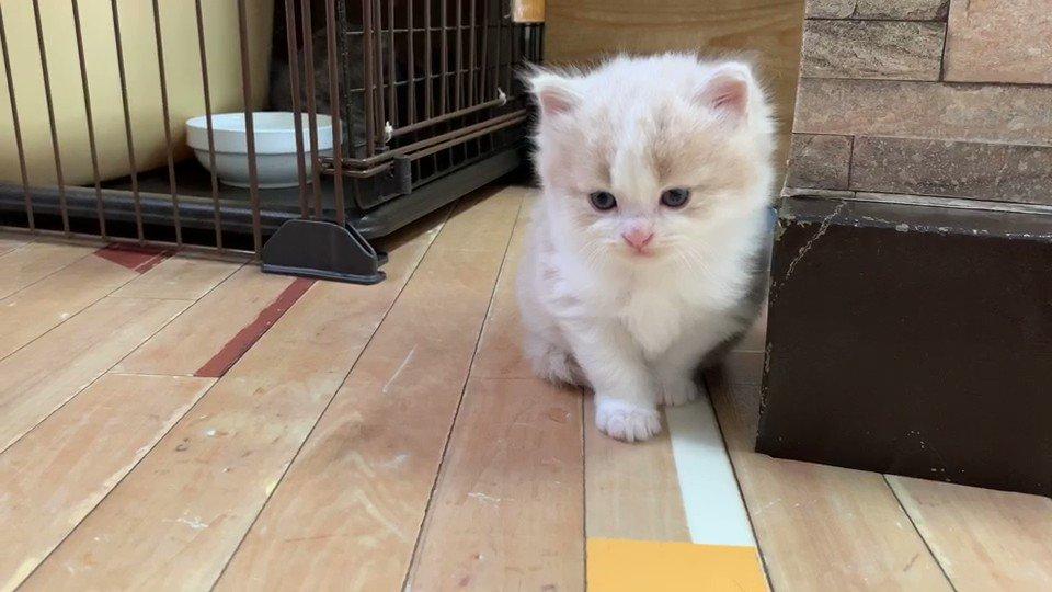 ペンとモカとこの子で、家が賑やかになりそうです🥰#猫