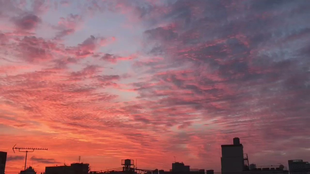I couldn't sleep well last night, and woke up to this!!  Tokyo's sunrise! Gorgeous!   #Tokyo #sunrisepic.twitter.com/6srl9VFyh9