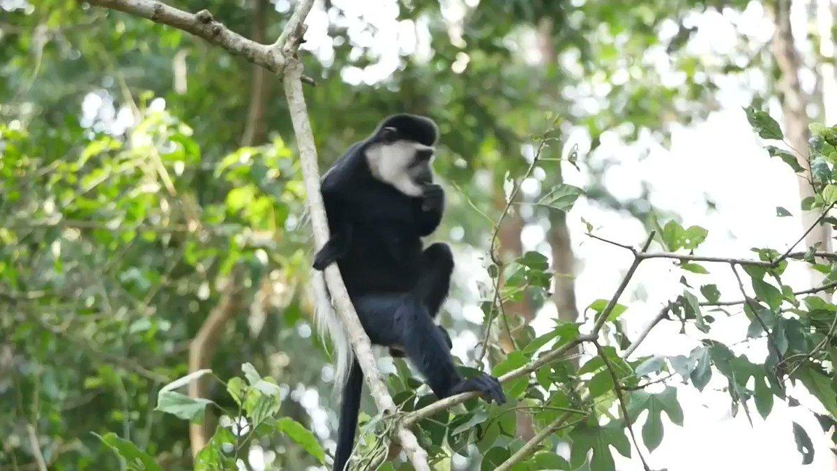 Caption this  #SaturdayVibes #travelblogger #VisitUgandapic.twitter.com/5SH58uaLvp