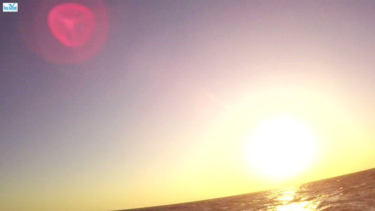 Good #SundayMorning from #LakeMichigan. Video taken by the #WilmetteBuoy, May 31, 2020.   Take care, humans.  cc @ILINSeaGrant @LimnoTech @PurdueFNR