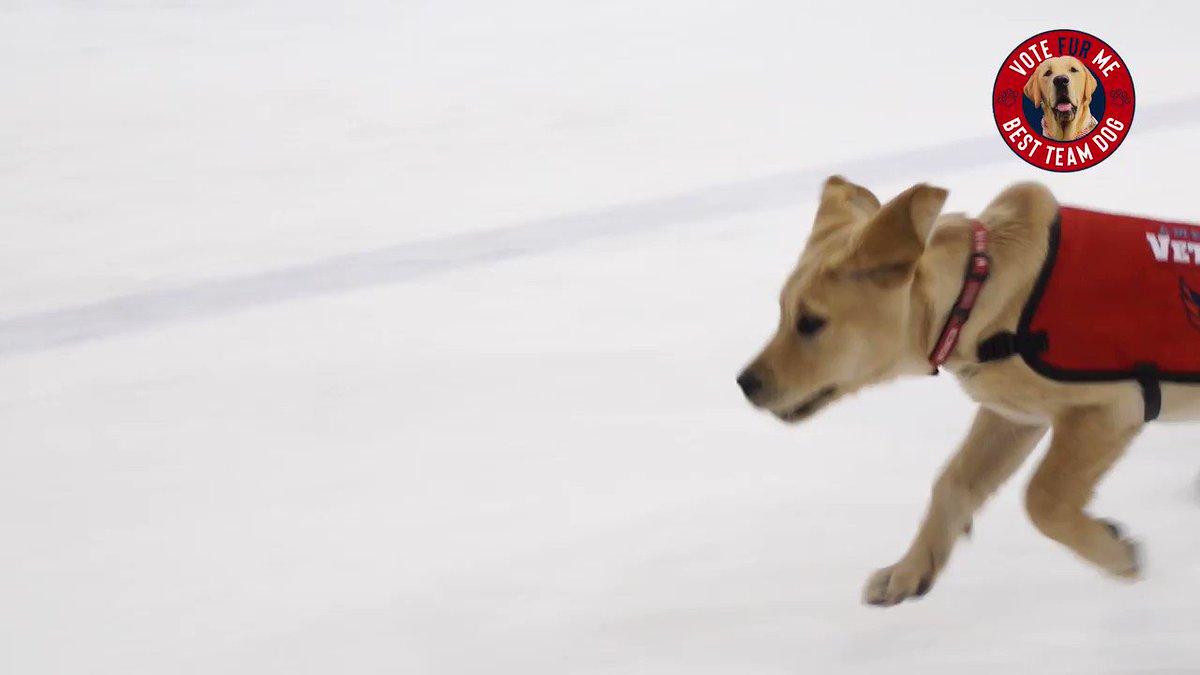 immmaa natural on the ice