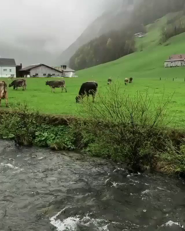 Appenzell 🇨🇭 Nature at its Best ♥️ https://t.co/f5HJ5mhJRr