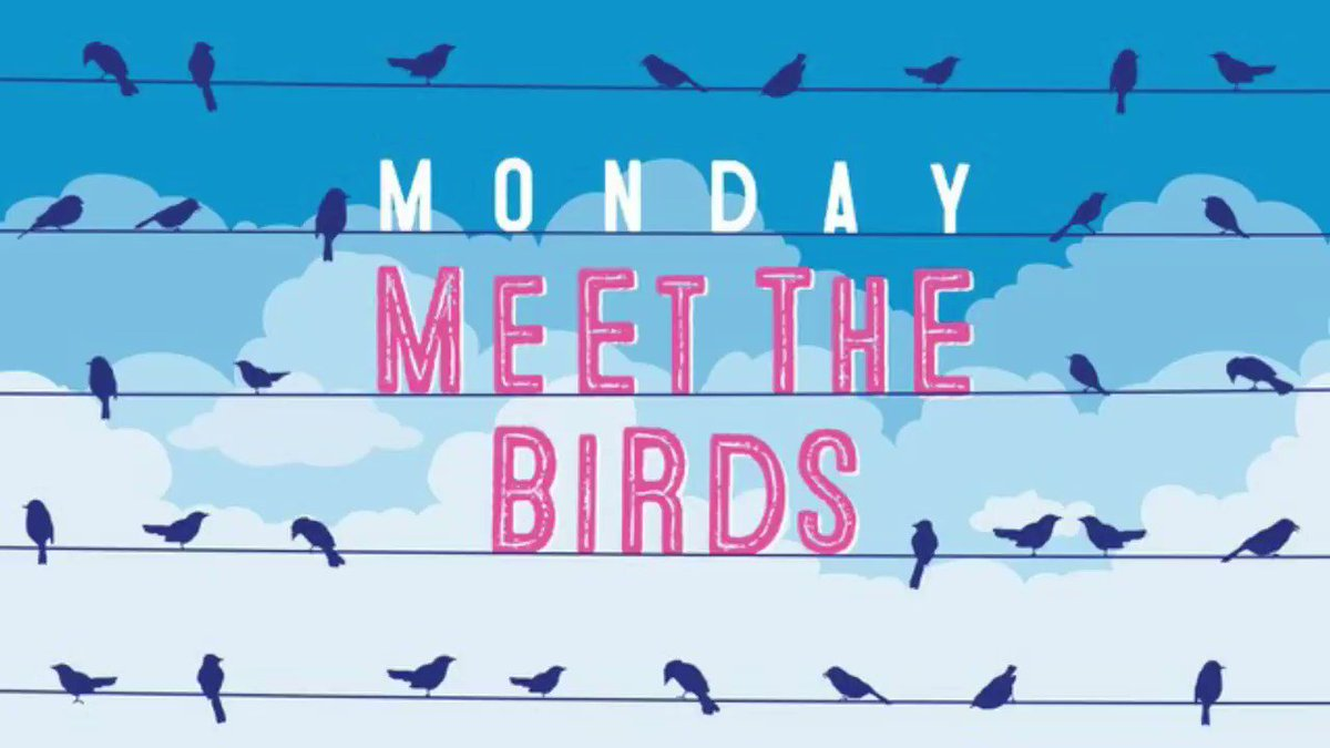 "Image for the Tweet beginning: Today's ""Meet the birds"" episode"