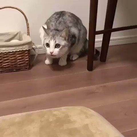 何の動き?