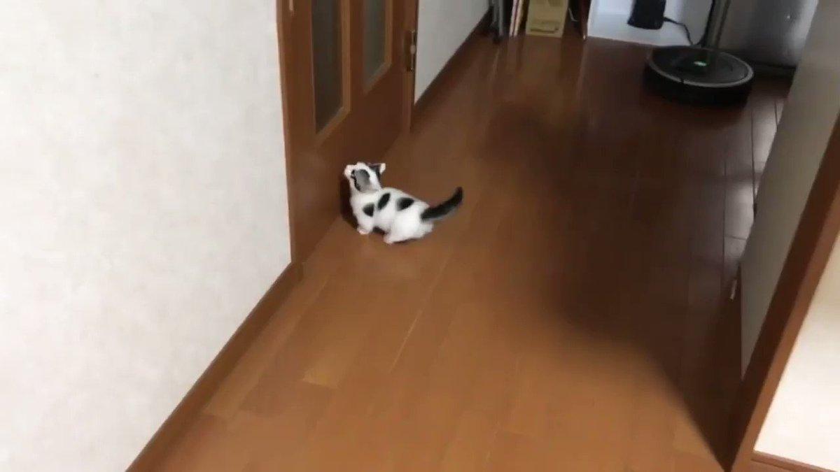 ひのき家の豆大福の動画です😃