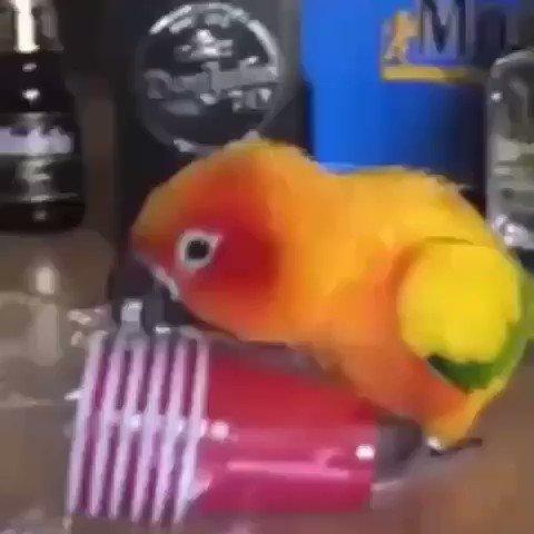 Crazy bird #animals #cuteanimals #funpic.twitter.com/UDMUSnHOyM