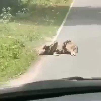 Brave man    #deer #animals #wildlife #nature pic.twitter.com/VxZ9XtbQrH