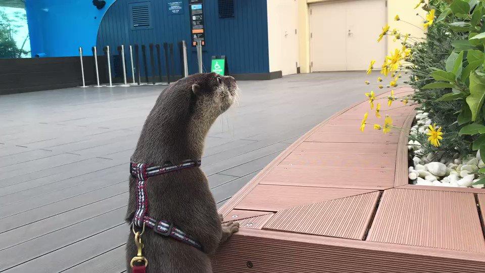 背中で語る獺#毎日カワウソ #休園中の動物園水族館