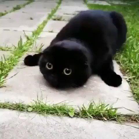黒猫ちゃんのまん丸の目がかわいい♪