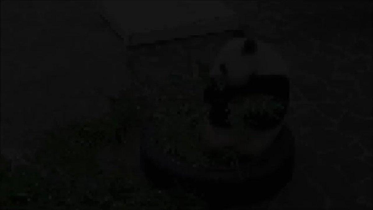 たんたんさん、11:45に屋内展示になりました🐼#きょうのタンタン #王子動物園#たくさんお食べ