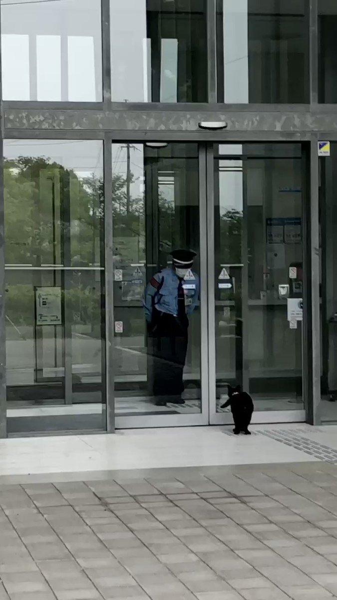 『中立地帯😸neutral zone 』(2020/ 6/ 6朝) 🎨警備員さんも気づき、風除室へ。#尾道 #千光寺公園 #尾道市立美術館 #黒猫 #cat