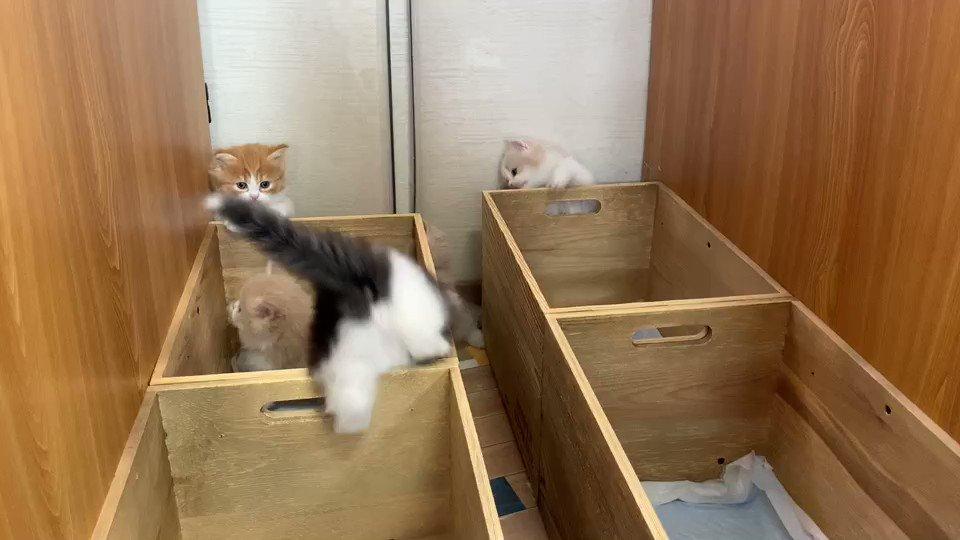 ラテを探せ!🤩#猫