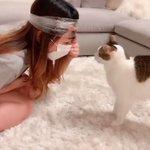 これはいいアイデア!?チュールを頭につけ、猫が夢中で食べてる最中に爪切り
