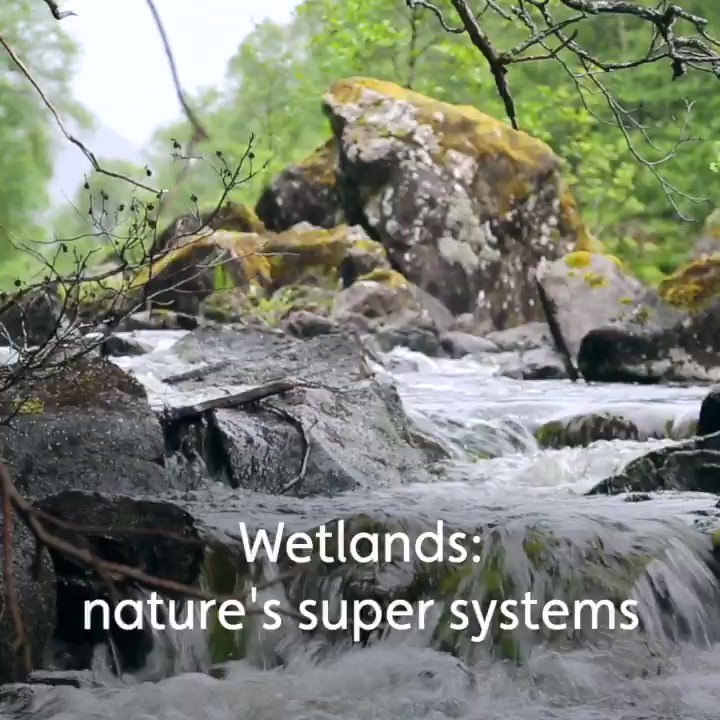 Our planet faces a biodiversity crisis on a scale never seen before. Nowhere is this more acute than in our rivers, lakes and wetlands 🌍💧🌱 Looking after natures super systems holds the key to solving the wider problem > features.wwt.org.uk/natures-super-… #WetlandBiodiversityMatters