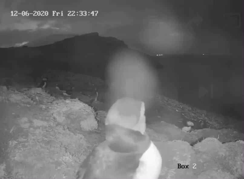 Oooo hello there! 🐧👋😊 #Puffin #Webcam @skomer_island Watch ➡️ youtube.com/user/theWTSWW