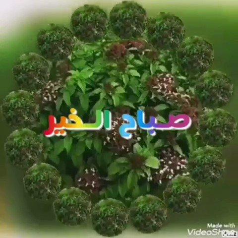 رجا الهذلي (@rm1395rm) on Twitter photo 2020-06-13 05:35:52