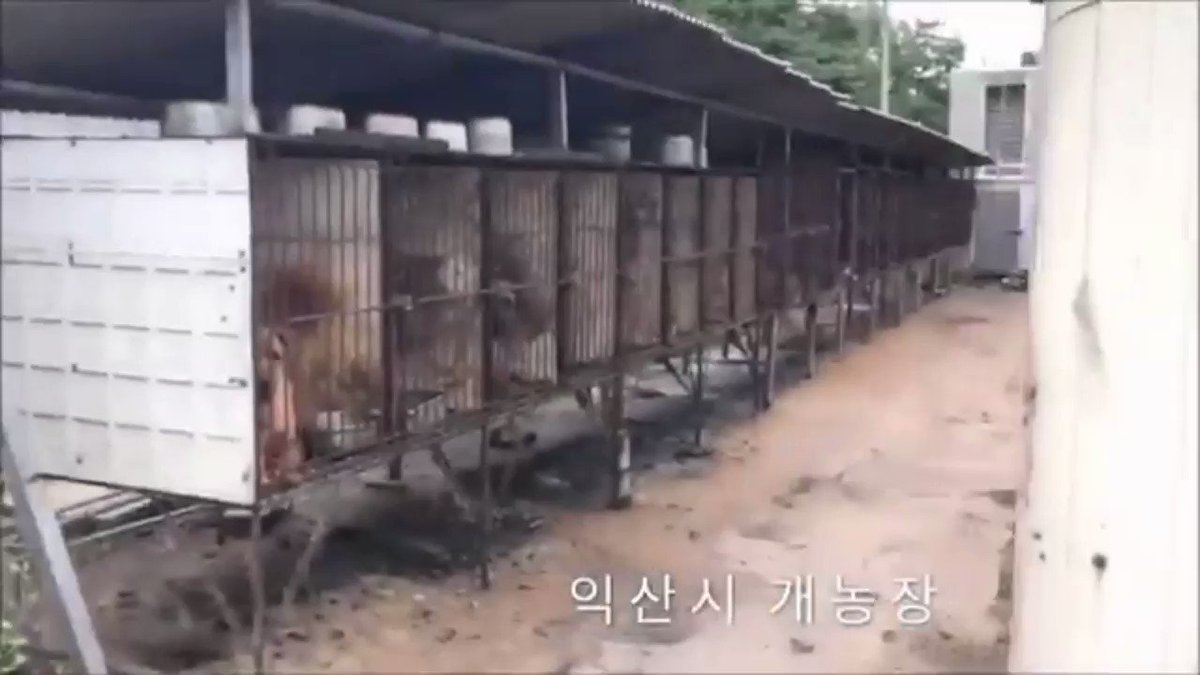 TWEETSHEET LOCAL CAMPAIGNS by #SaveKoreanDogs asking to end the #DogMeatTrade in the Cities of #SouthKorea and raising awareness about this cruel trade  ON INTERACTIVE WEBSITE FOR TWITTER ACCOUNTS https://www.savekoreandogstwteam.com/local-skd-campaigns… by @NamiKim_DogsSKpic.twitter.com/m1NrHRY8fu