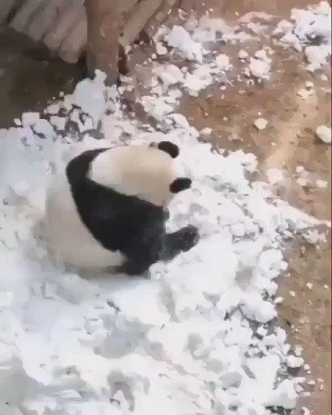 転がっていくパンダ