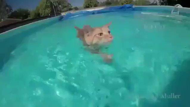泳ぎがうまいにゃんこちゃん@@;