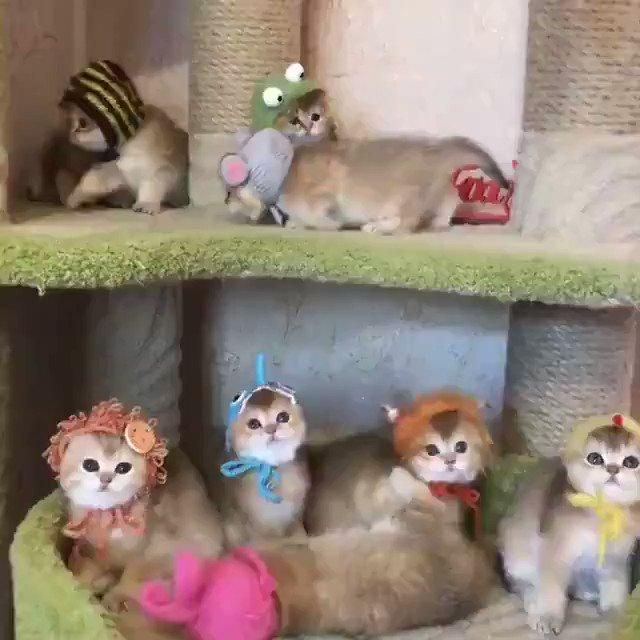 子猫ちゃんワールド=^_^=