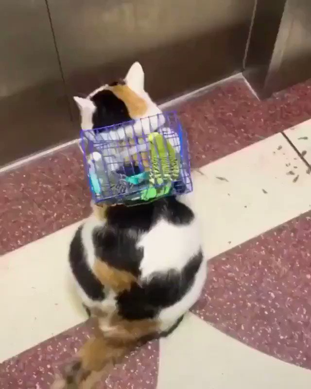 どこに行くのかな?