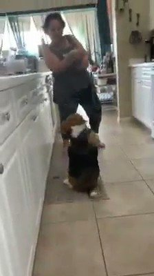 It is too beautiful this little dog a good dancer 💞🐶💃😂 https://t.co/tnp9pyXDTT