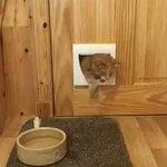 おデブな猫!猫用の扉から侵入しようとしたら、結果ドアごと開いてしまったw