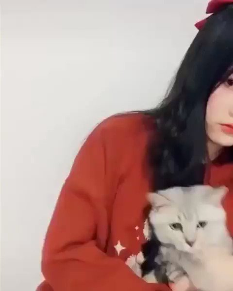顔フィルターに反応する猫