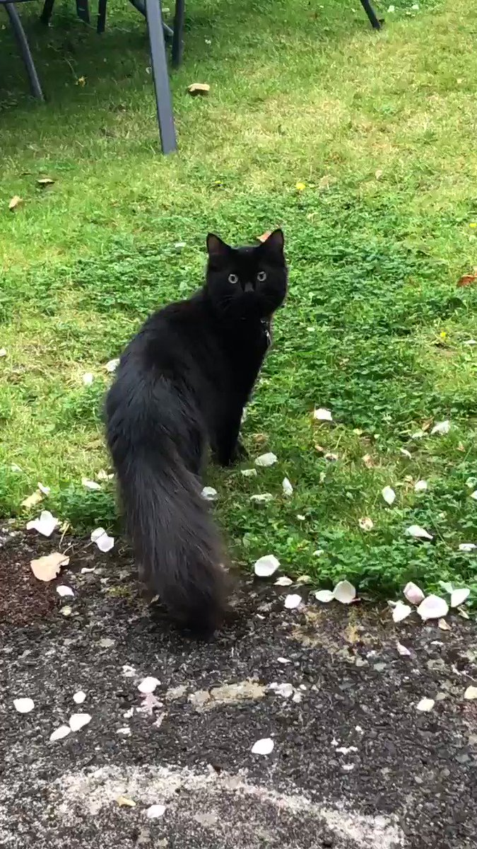 @thecatreviewer Just a mega-tail, wide as his body.