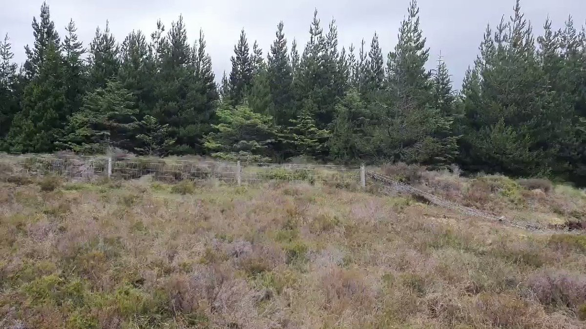 Plantation forestry pushing the bog downhill ahead of itself in #Leitrim Unbelievable sights