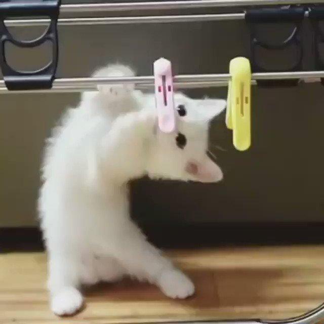 洗濯バサミが気になるネコ