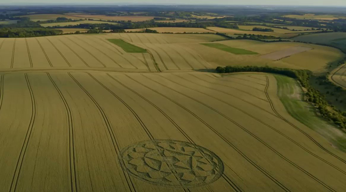 Image for the Tweet beginning: #CropCircle Sunset Cheesefoot Head -