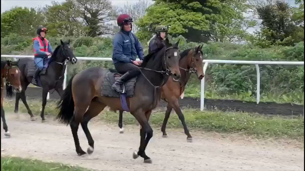Runner at Doncaster tomorrow - SPECTROMETER -  Couple of shares still available in this lovely colt by Kodiac. Fancy a Run-For-Your-Money? Check-out the details at https://t.co/EtAdZgJ4Bm
