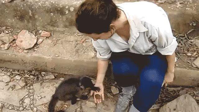 Small monkey shows big monkey how to use stone tools m.imgur.com/L6hXgpo