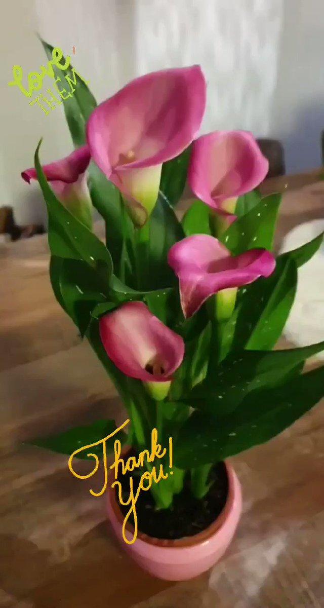 #thankyou #Flowers #Love #pinkflowers #Pink