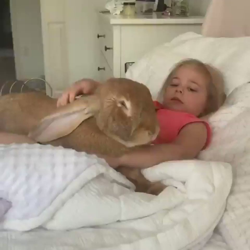 What are you feeding that rabbit?