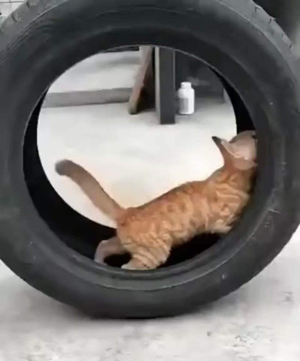 Two tyred? Never. ONE tyred.