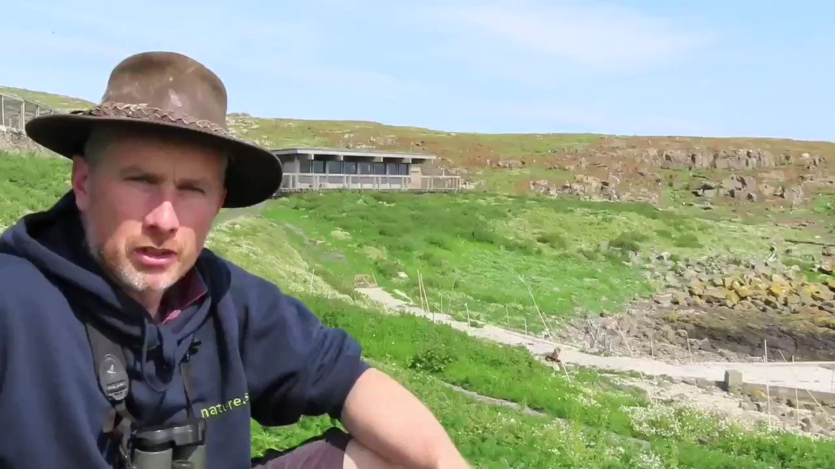 Its all go on the Isle of May with staff @BexOutram and @SteelySeabirder, back on the island after lockdown, busy monitoring and counting the Arctic terns as chicks begin to hatch. As featured on @BBCScotNine last night, watch back from 55mins here: ow.ly/G0kx50ArA2g