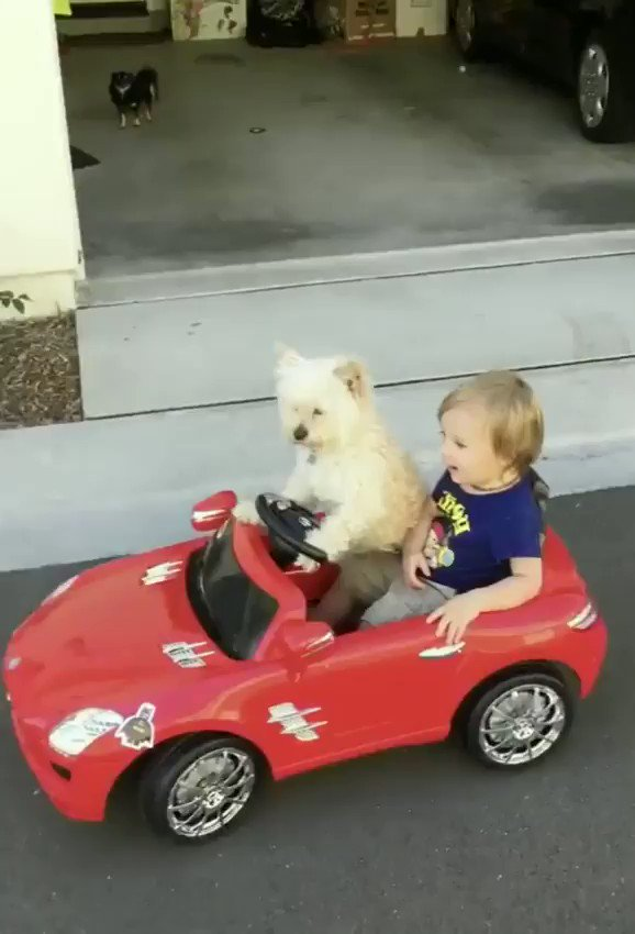 Oh nothing, just a puppy driving around a kid...