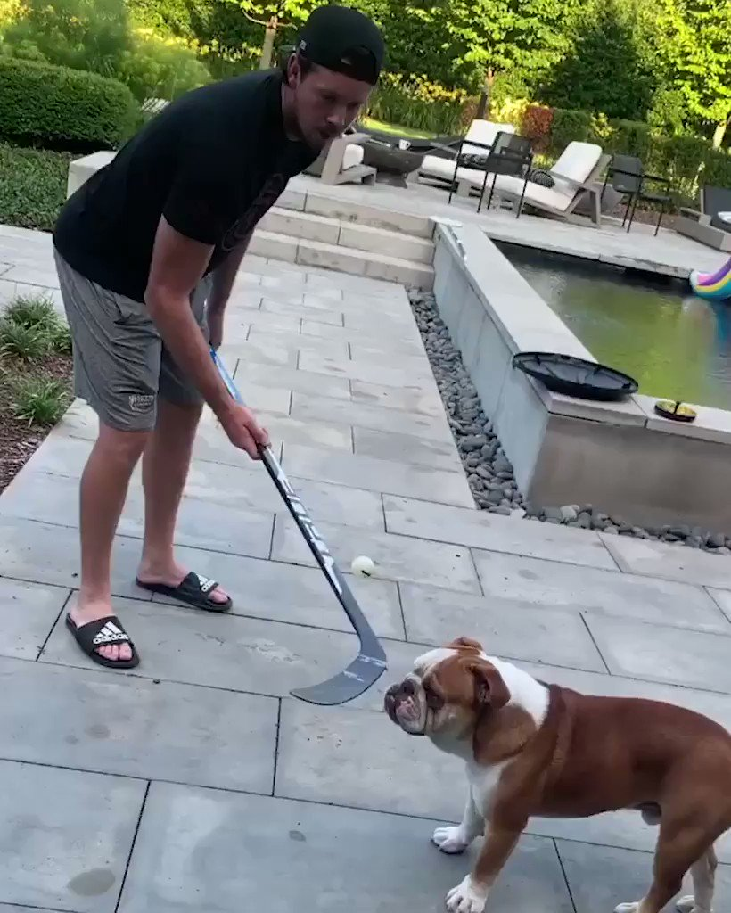 Cool, calm and collected. Dozer is the ultimate defender. 😂 (🎥 @RyanJohansen19)