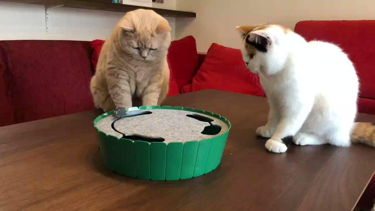 「電動ぐるぐるマウス」で遊ぶ猫