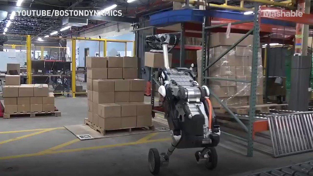 Handle, one of Boston Dynamics fleet of humanoid and fairly frightening robots, is mature enough for a day job v/ @mashable #AI #Robotics cc @alvinfoo @helene_wpli @HaroldSinnott @kalydeoo @andi_staub @alvinfoo @FrRonconi @jblefevre60 @Paula_Piccard