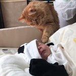 赤ちゃんに興味深々な猫ちゃん!その後ずっと仲良しな2人にほっこり!