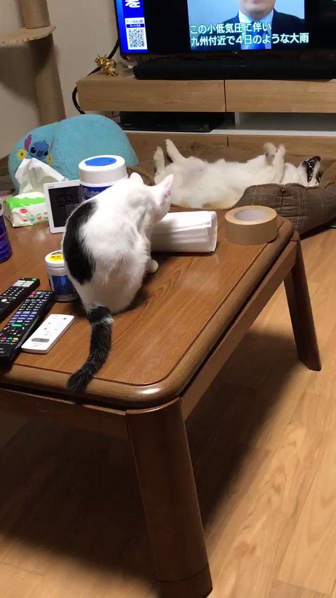 RT @mnjro: 珍妙な生物を観察する子猫 https://t.co/5uKQ13OYEB