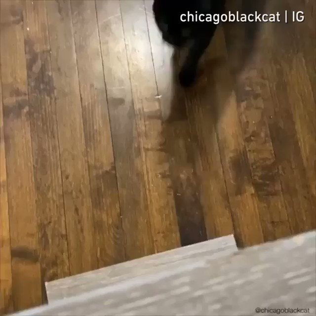 From chicagoblackcat  I am the night. Plz feed the night.  #meowed #meowedofficial #TheMeowedClub https://t.co/aIY6MuuySe