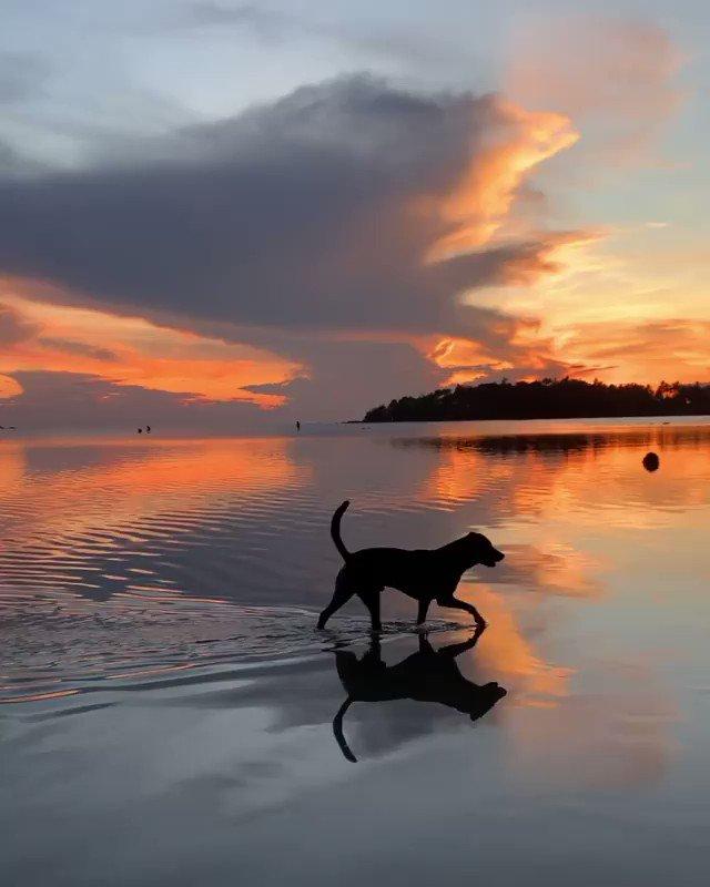 美しい水面を歩く犬様、ですね。