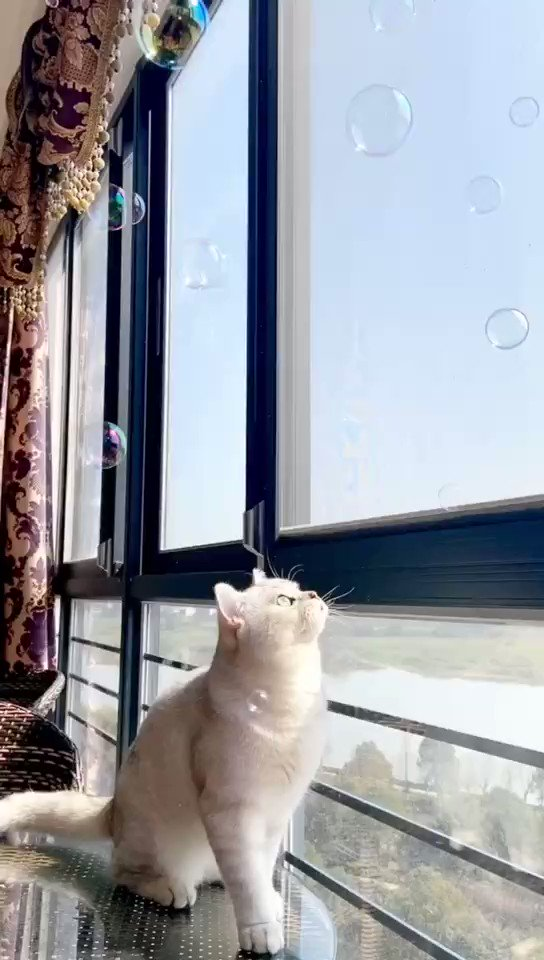 What a wonderful scene😍 #cats #cat #CatsOfTwitter #Caturday #CatsOnTwitter #CatsOfTheQuarantine #catsoncatnip #CatsAreWild #pets #petsupplies #petstagram #petsofinstagram #petsofinstagram #lovely #cute #animals #AnimalOfTheDay #catlover #catlovers https://t.co/0GwUVSXjUc