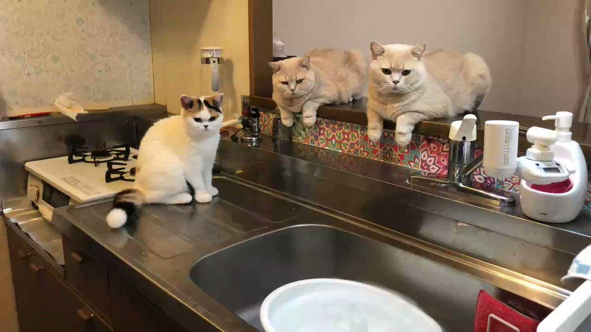 ドライアイスが溶けるのを眺める猫たち