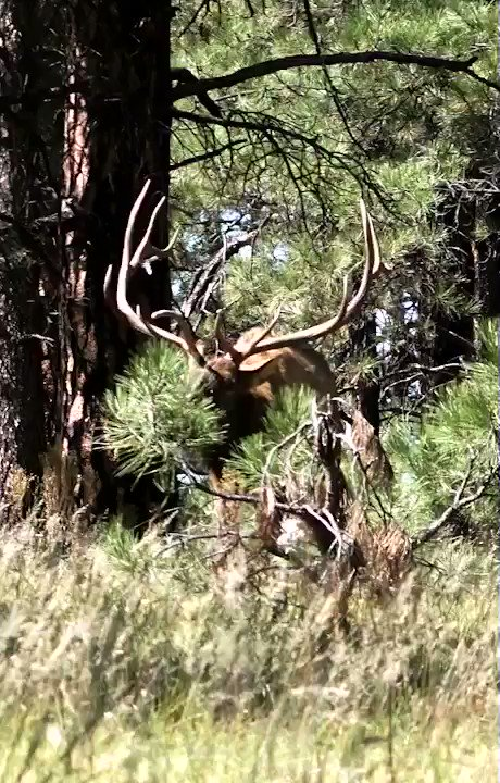 Elk hunting in New Mexico! 😳 Have you eve been elk hunting?