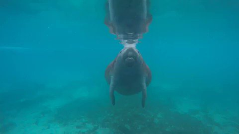 It's #ManateeMonday! RT if you 💙 #manatees. https://t.co/M6DtVyUeNW